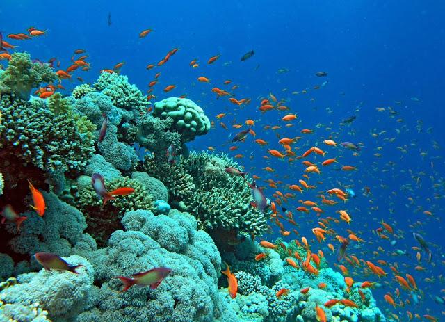 Red Sea Snorkeling(2)