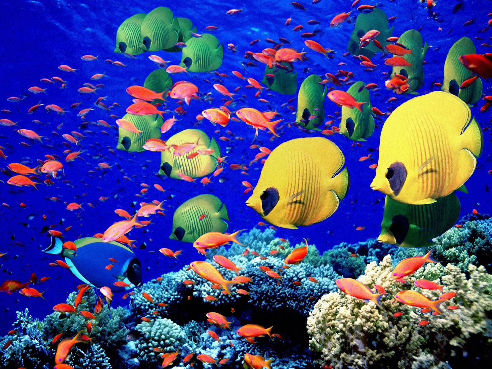 The Red-Sea underwater photos
